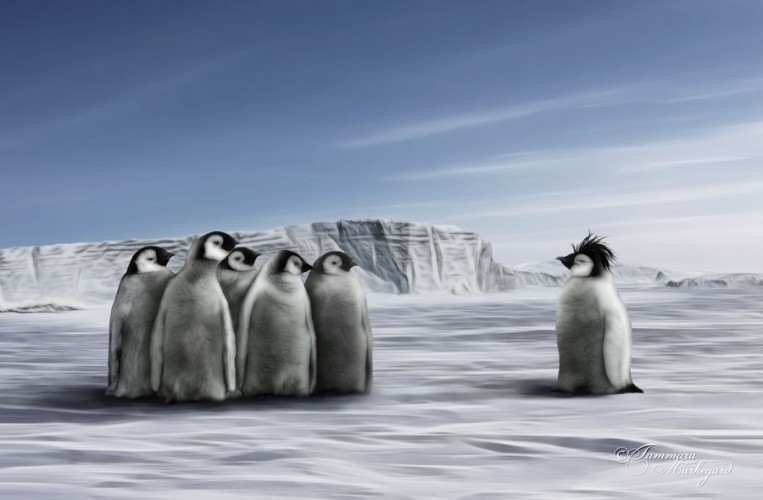 one plus group of penguins